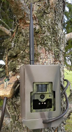 ScoutGuard MG883G-12m Trail Camera Security Lock Box